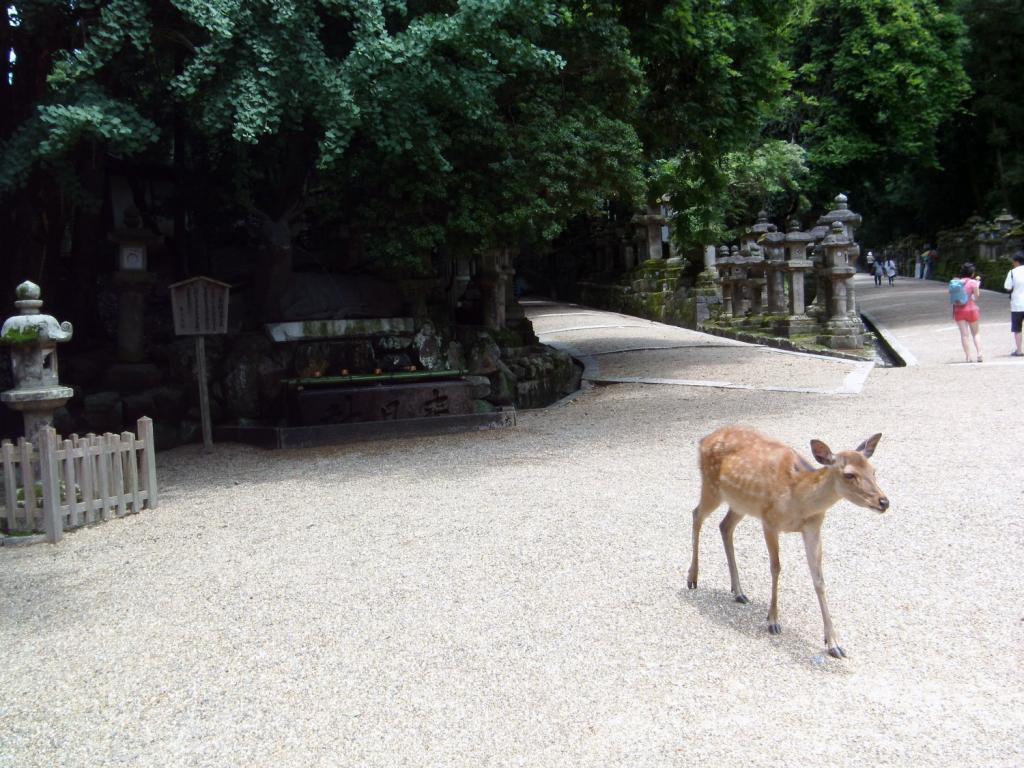 Ein Reh in Nara