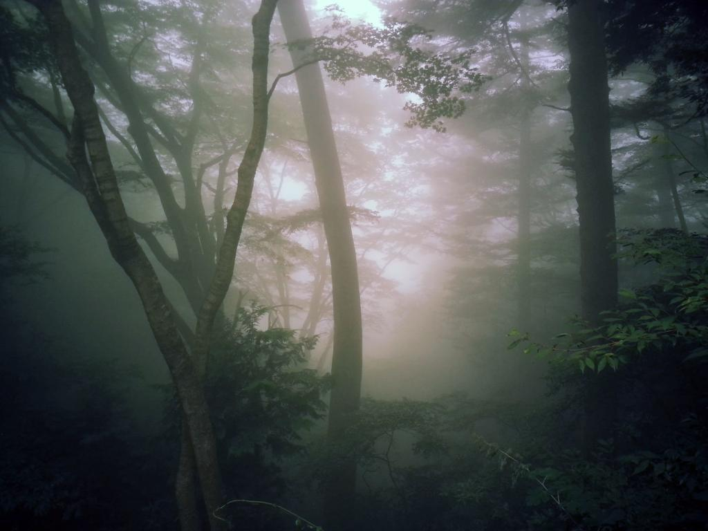 Nebel zieht auf, Takao-san Japan