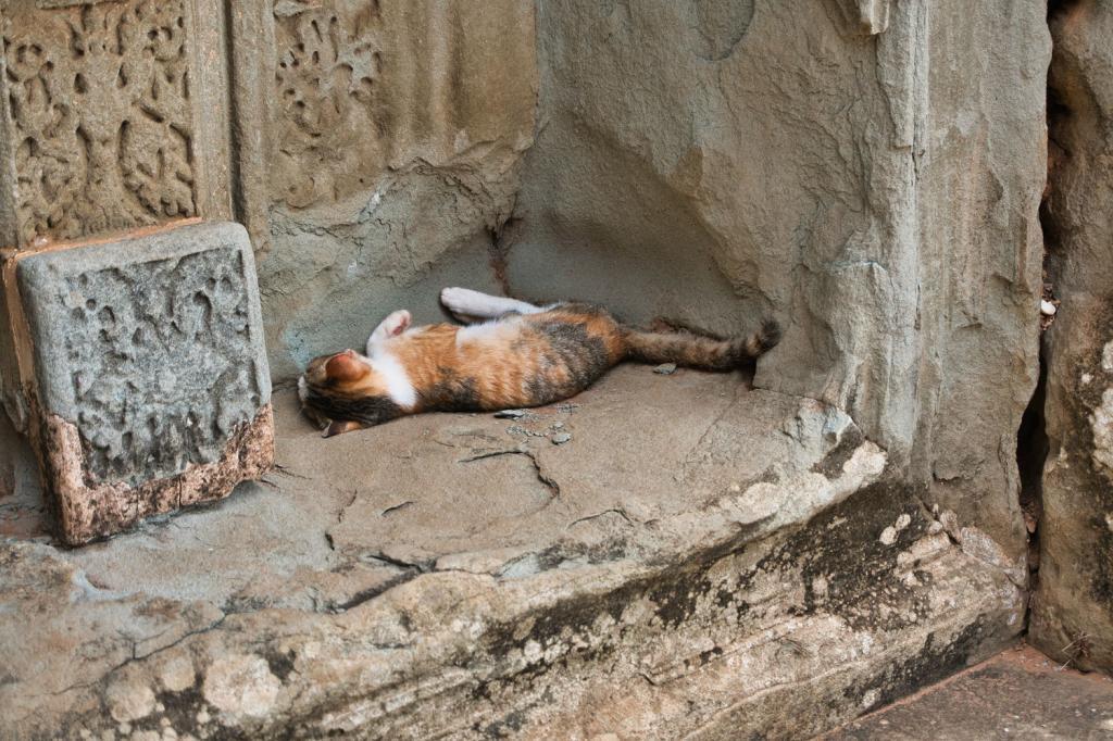 Katze schläft im Schatten beim Pre Rup in Kambodscha