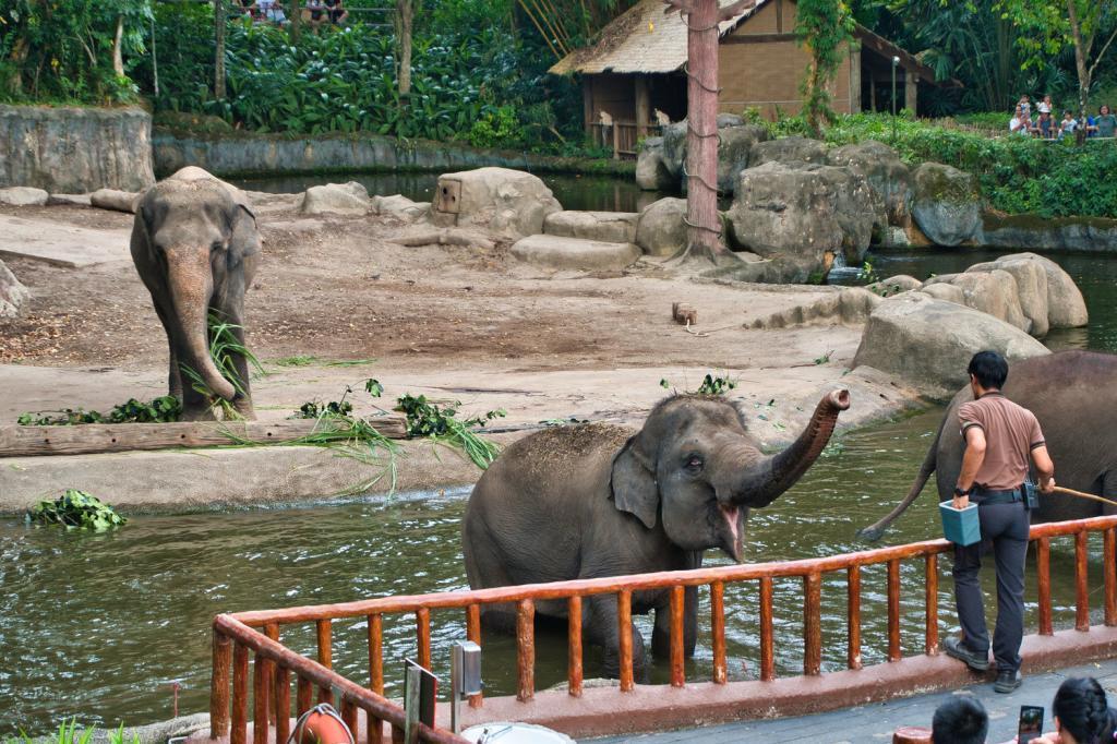 Elefanten Show im Singapore Zoo in Singapur
