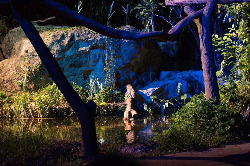 Fishing Cat während der Show in der Night Safari in Singapur