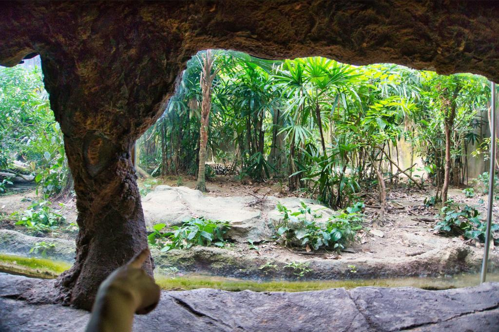 Jaguar während der Amazonas River Quest in der River Safari in Singapur