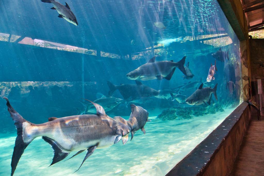 Aquarium der River Safari in Singapur