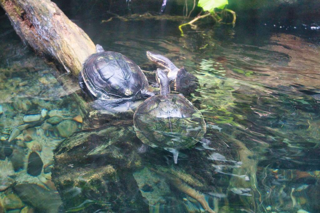 Schildkröten im Singapore Zoo in Singapur