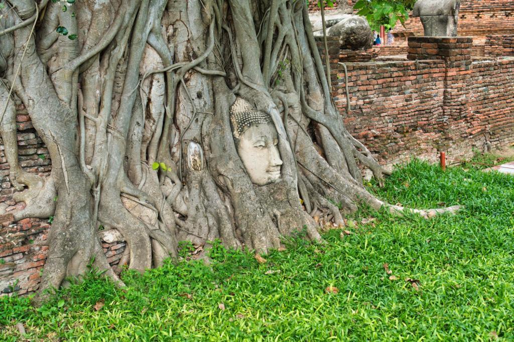 Buddah-Kopf in den Wurzeln eines Banyan Baums in Thailand