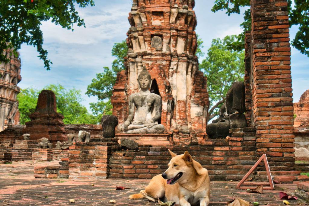 Hund im Wat Mahathat in Thailand