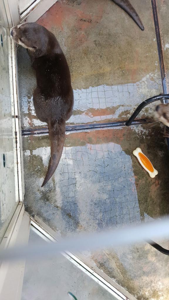 Otter von oben