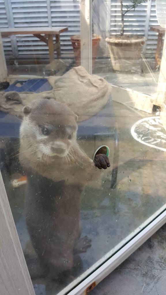 Süßer Otter