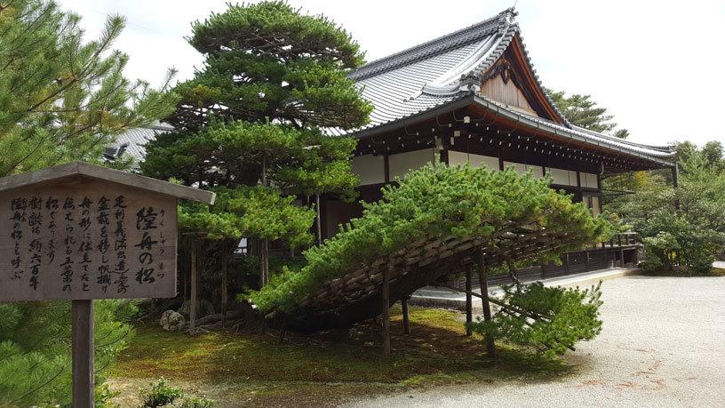 Ein großer Bonsai in Form eines Schiffes beim Kinkaku-ji.
