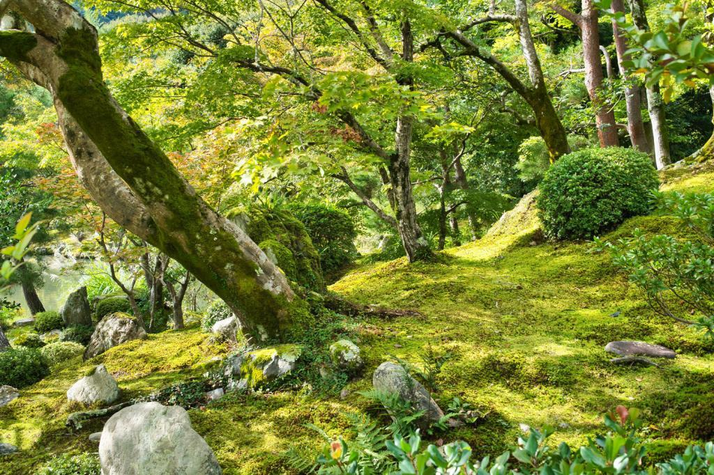 Japanischer Garten im Tenryu-ji in Kyoto.