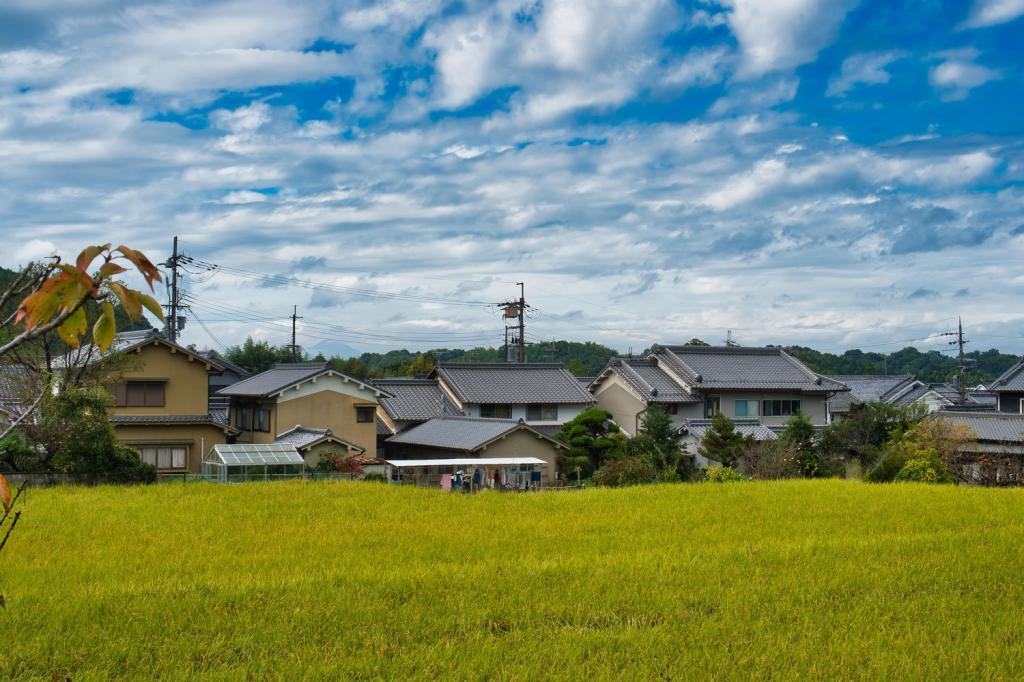 Reisfelder vor dem Dorf Asuka