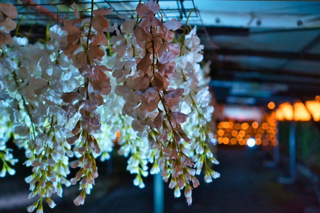 Illumination an der Pferderennbahn in Tokio: Illuminierte Blauregen-Blüten.