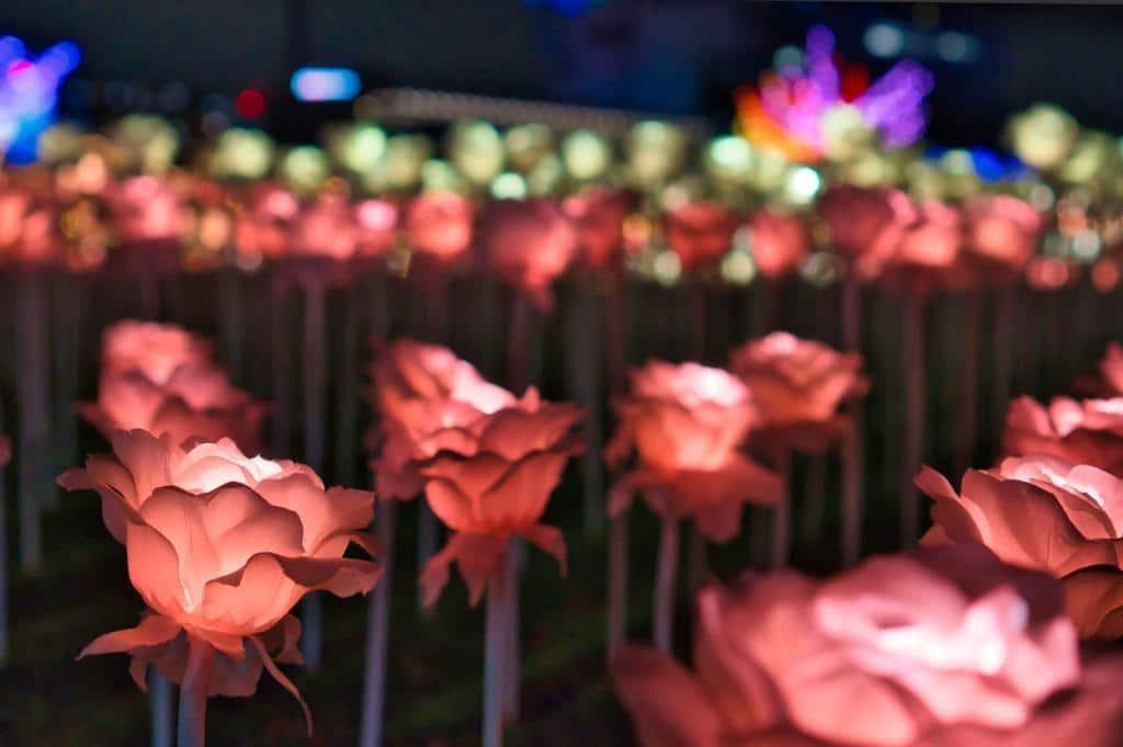 Illumination an der Pferderennbahn in Tokio: Wunderschöne Lichtrosen.