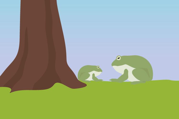 lustige japanische sprichwörter: zwei Frösche ein Junger und ein Alter die genau gleich aussehen