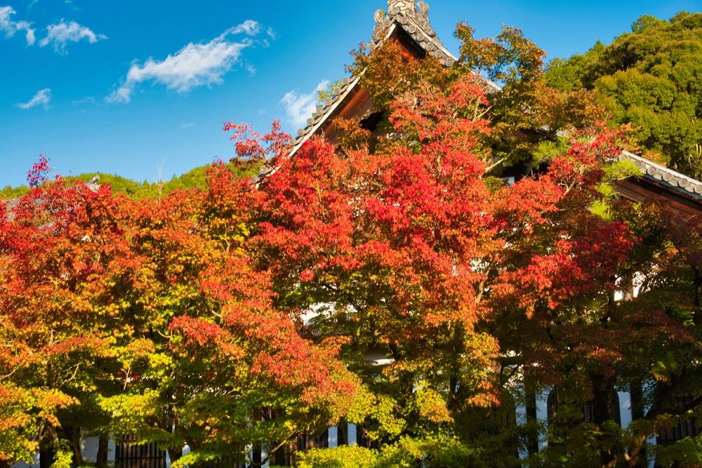 Bäume mit bunten Blättern vor einem Tempel in Kyoto in Japan im Herbst