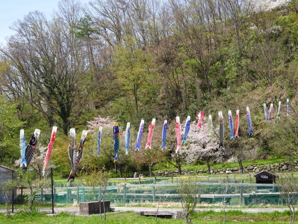 Golden Week Koinobori