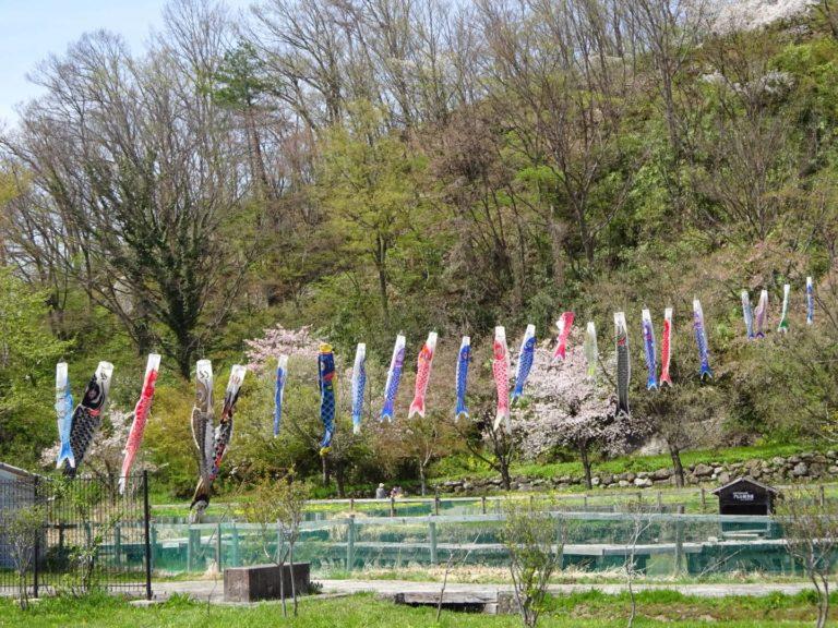 Golden Week Koinobori